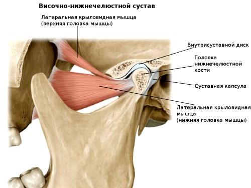 Височно-челюстной сустав мышци реабилитация после эндопротезирования коленного сустава форум