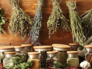 Лекарственные травы при подагре